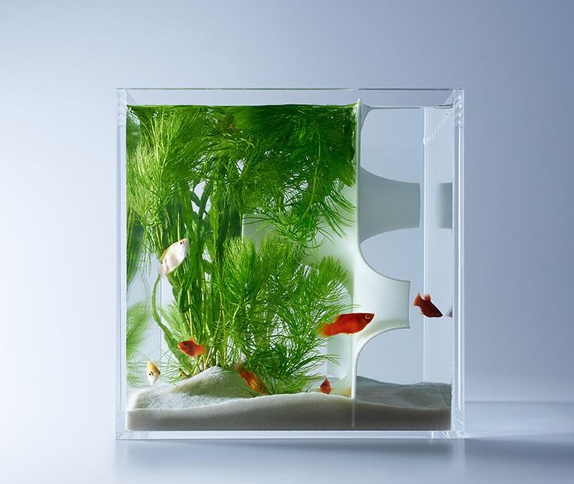 haruka-misawa-waterscape-fish-aquariums-etoday-02